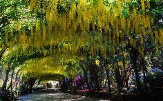 Bodnant Gardens, Conwy, Wales, UK |
