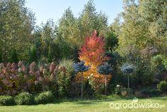 Grujecznik, Ogród z uśmiechem - strona 1103 - Forum ogrodnicze - Ogrodowisko Garden, Plants, Garten, Lawn And Garden, Flora, Gardening, Outdoor, Plant, Gardens