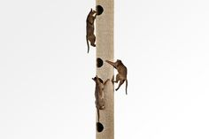 Hicat_Floor-to-Ceiling_Cat_Climbers_For_Exercise_&_Play_1.jpg