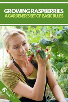 A complete guide to cultivating raspberries, including the benefits of growing berries and planting, care, and harvest information for raspberry plants. Small Space Gardening, Gardening Tips, Sustainable Gardening, Container Gardening, Fruit Garden, Edible Garden, Pruning Raspberries, Love Garden, Garden Ideas
