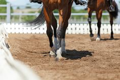 20-Minute Rides You Can Do in Walk Hunter Course, Horse Riding School, Fox Lake, Horse Magazine, All Ride, Horse Exercises, Walking Horse, Dressage Horses, Horse Care