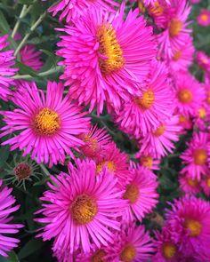 Flowers Garden, Sunday, Nature, Instagram, Design, Style, Domingo, Design Comics, The Great Outdoors