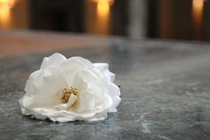 University of Munich. White Rose in honor of Sophie Scholl.