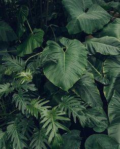 outdoor tropical plants garden ideas for the home Leave In, Tropical Leaves, Tropical Plants, Palm Plants, Motif Jungle, Plant Aesthetic, Tropical Vibes, Green Plants, Green Garden