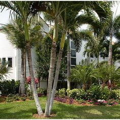 Tropical Landscape Design, Pictures, Remodel, Decor and Ideas - page 95