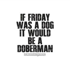 Dobermans are the best! So are Fridays! #doberman #dobermanpinscher #dobermanpride