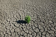 A weed grows out of the dry cracked bed of O. Fisher Lake on July 25 in San Angelo, TX.