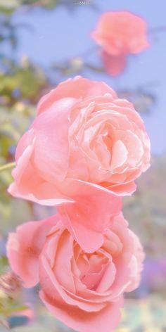 Iphone Wallpaper Plants, Wallpaper Ideas, Flower Aesthetic, Pink Aesthetic, Pretty In Pink, Beautiful Flowers, Future Wallpaper, Sailor Moon Wallpaper, Disney Wallpaper