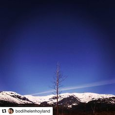 Stolt. #reiseblogger #reisetips #reiseliv  #Repost @bodilhelenhoyland with @repostapp  @tree_loves@tree_magic@tree_captures@pocket_trees@splendid_woodlands@woodsofnorway@mountainsofnorway@splendid_mountains@9vaga_skyandviews9@splendid_outskirts@igphotoworld@ig.shot@ig_world_color@fantastic_earth#ulvik#thepearlinhardanger#norway@dreamchasersnature@dreamchasersnorway@dreamchaserstravel@dreamchasersworld@travelsmind#hugatree@lonely_tree_love