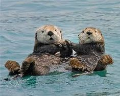 Funny pictures about You are my significant otter. Oh, and cool pics about You are my significant otter. Also, You are my significant otter. Baby Otters, Otters Cute, Baby Sloth, Baby Animals, Funny Animals, Cute Animals, Baby Giraffes, Animal Facts, My Animal