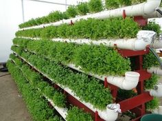 If you were looking for hydroponic gardening, take a look below Vertical Vegetable Gardens, Veg Garden, Vegetable Garden Design, Garden Pests, Hydroponic Farming, Hydroponics, Container Gardening Vegetables, Farm Gardens, Growing Vegetables