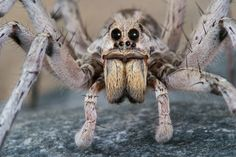 LiveScience. . . Wolf Spiders
