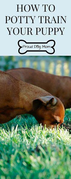 puppy training potty | puppy training potty pad | puppy training potty go outside #puppytrainingidea #puppypottytraininggooutside #dogpottytraininggooutside #dogtrainingnearme