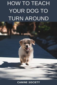 """how to teach your dog to turn around You can train your dog to do a lot of cool things, like picking up your toys or hugging you. But teaching him certain practical tricks, such as how to turn on command, is also worthwhile. In a variety of situations """"Turn"""" can be useful — everything from changing direction on a walk to steering away from a dangerous or problematic situation. Dog Commands Training, Training Your Dog, Hug You, Teaching, Cool Stuff, Toys, Activity Toys, Clearance Toys, Education"""