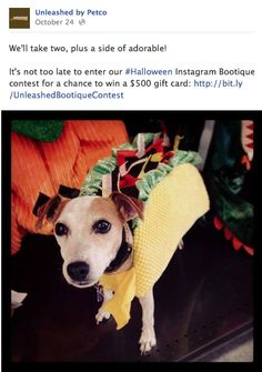 14 Tickled With The Cuteness Of Dog S Costume Oldest Daughter Enters