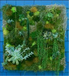 """This vertical garden, or garden wall, features moss as well as succulents. The garden is a brilliant expression of """"green"""", features a variety of green hues."""