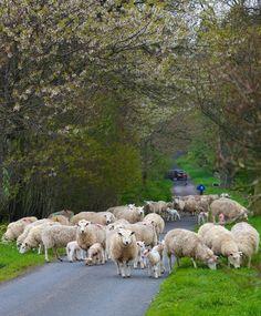 Traffic Jam, Rothbury, Northumberland