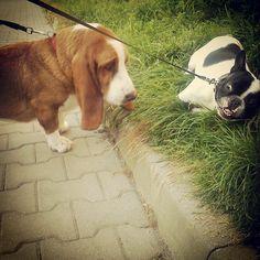 Marley i Bajzel szatan :-D