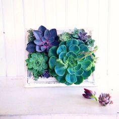 Vertical Succulent Garden , Planter