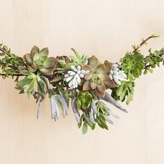 Succulent Garland, originally styled as a Christmas decoration. Don't you think it would make a fabulous aisle decoration or sweet accent draped along the back of the last row of seats? Diy Christmas Garland, Diy Garland, Christmas Holidays, Christmas Decorations, Christmas Ideas, Holiday Ideas, Garland Ideas, Winter Holiday, Succulent Soil