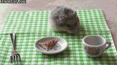 Tiny Hamster Enjoys a Tiny Pizza