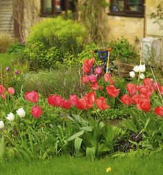 Müsst ihr kleine Sträucher mit einfachen Blüten, mehr Grün in den Garten zu bringen. Jeder Garten können immer mehr grün.