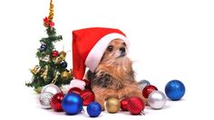 Make-Christmas-enjoyable-for-your-dog