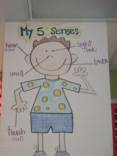 5 Senses Anchor Chart, seeing and identifying senses parts and words Más Five Senses Kindergarten, Five Senses Preschool, 5 Senses Activities, My Five Senses, Kindergarten Anchor Charts, Kindergarten Science, Science Classroom, Teaching Science, Science Activities
