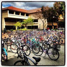 finals week at Stanford University