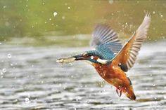 More than a blue flash – kingfishers in Dorset | Dorset Life - The Dorset Magazine