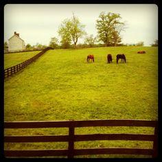 horse farms.