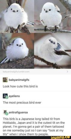 24 hilarious stuff comment – quotes and humor Humor, Pets, Bird, Nice, Art, Sweet Animals, Adorable, Hilarious, Creatures