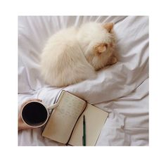 Reposting @bastetnoir: Wednesdaying . #bastetnoir #home #vibes #cat #fashionblogger #blogger #styleblogger #dailyinspiration #fashioninspo #inspirational #instagram #mood #coffee #moment #like #this #instagram #instagood #instagrammer #cheers #chill #inbed #allday #coffeetime #catsofinstagram #lazy #coffeetime #coffeelover #coffeeinbed #wednesday