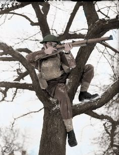 A soldier from the 2nd Warwickshire Regiment takes aim with his rifle while seated in a tree, Rumegies, 22 January 1940