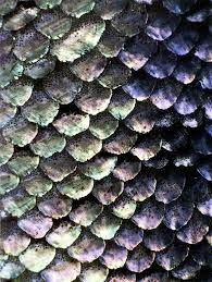 Image result for mermaid scales