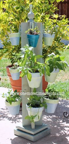 DIY: Spinning Mint Herb Garden indoors or out!