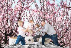 Fototapeta drzewa z delikatnymi kwiatami, do sypialni lub pokoju. Wzór nr DEW09 © #fototapety #fototapeta #mural #drzewa #kwiaty #sypialnia #wallit #copyright #bedroom #tapeta