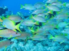 School Crossing (Blue) $10.99 Colorful school of fish