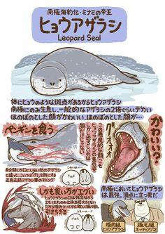 ヒョウアザラシ Animal Facts, Animal 2, Weird Creatures, Sea Creatures, Pretty Animals, Cute Animals, Nature Animals, Animals And Pets, Aliens