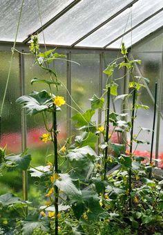 Best Schnecken Bek mpfung garten Pinterest Terrace Gardening and Balcony