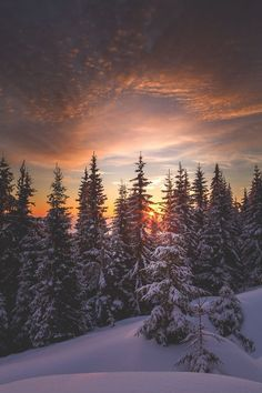 Last days of winter by Sasha Bystrikov Winter Photography, Landscape Photography, Nature Photography, Winter Scenery, Winter Trees, Snowy Trees, Winter Wallpaper, Nature Wallpaper, Wallpaper Paisajes