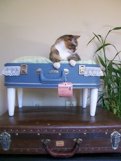 vintage suitcase cat bed (or for my chihuahua:)