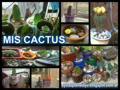 Mis cactus  S.O.S PLANETA: MIS AMORES CACTUS