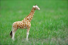 Needle Felted Giraffe - wool african wildlife - needle felted animals. $325.00, via Etsy.