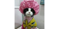 """27 Hilariously Ticked-Off Cats Who Do Not Want To Take A Bath (Slide #20) - Pawsome """"You'll notice that I'm not laughing!"""""""