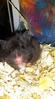 My Teddyhamster ^^