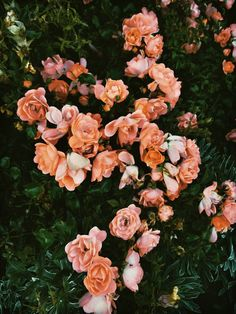 New flowers wallpaper iphone photography pink roses ideas Cute Backgrounds, Aesthetic Backgrounds, Aesthetic Iphone Wallpaper, Aesthetic Wallpapers, Natur Wallpaper, Of Wallpaper, Wallpaper Backgrounds, Exotic Flowers, Amazing Flowers