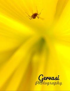 Macro Photography Gervasi Photography