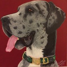 """This is Abraham Great Dane - a commissioned pet portrait Size:12"""" x12"""" x1""""  Medium: Acrylic Cotton canvas frame Gallery wrapped All portraits come with signed Certificate of Authenticity Price: £195.00"""