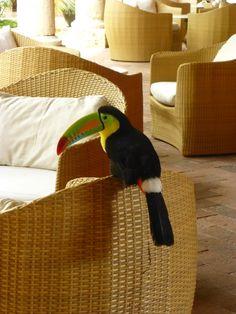 Tucano Mateo - Cartagena das Índias